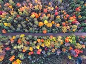 View of colorful trees next to Montreal, Quebec, Canada thanks to our Ultimate City Guide